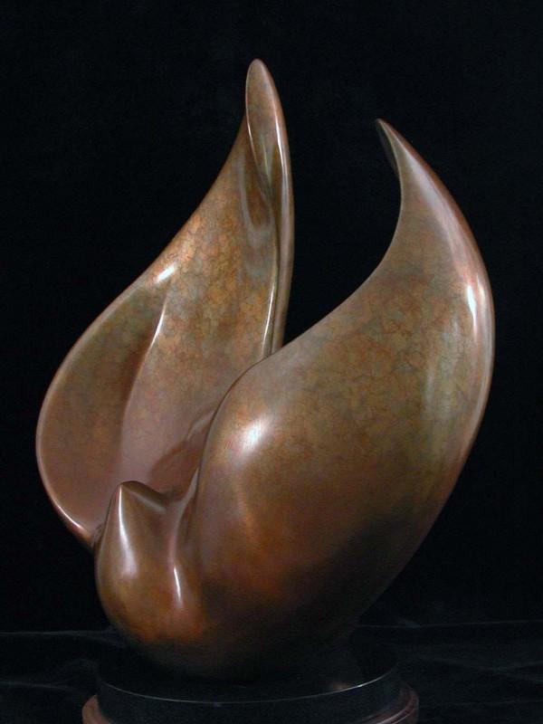 Encircling Dove